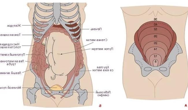 У беременной болит внизу с правой стороны 83