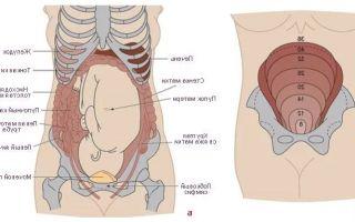 Кишечные колики внизу живота при беременности