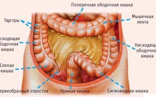 Дисбактериоз 1 и 3 степени у взрослых