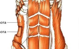 Болит внутренняя косая мышца живота справа