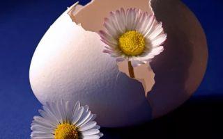 Почему отрыжка тухлыми яйцами