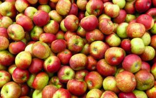 Почему от яблок пучит живот