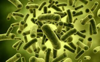 Как вылечить дисбактериоз кишечника