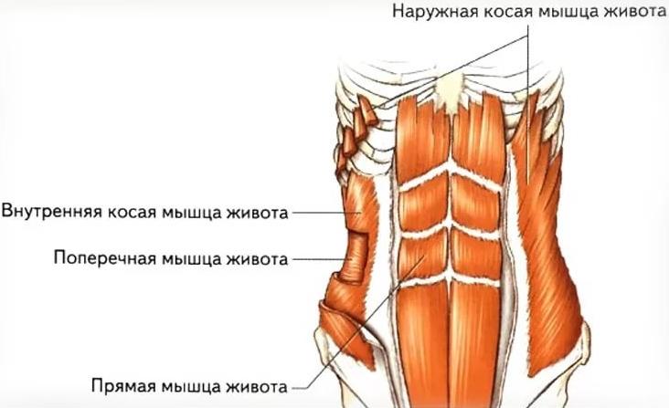 Член побаливает мышца
