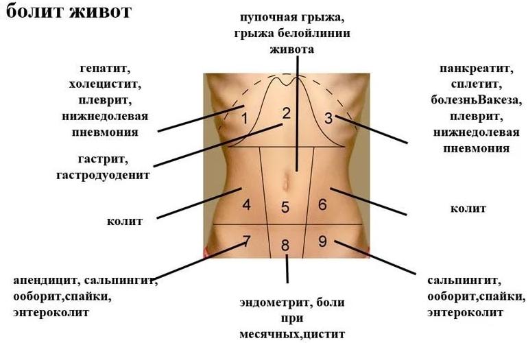 Почему болит низ и левый бок внизу живота у женщины