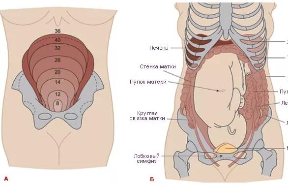 Боль в правом боку внизу живота на 35 неделе беременности что это thumbnail