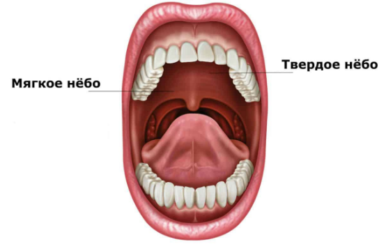 Болит нёбо во рту причины и лечение